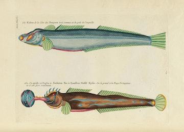 Louis Renard's Fish, Plate XLII
