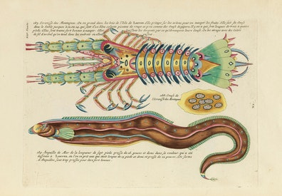 Louis Renard's Fish, Plate XLV