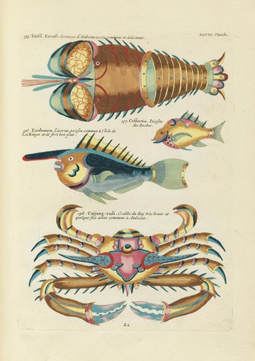 Louis Renard's Fish, Plate XLVII