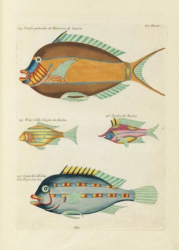 Louis Renard's Fish, Plate LV