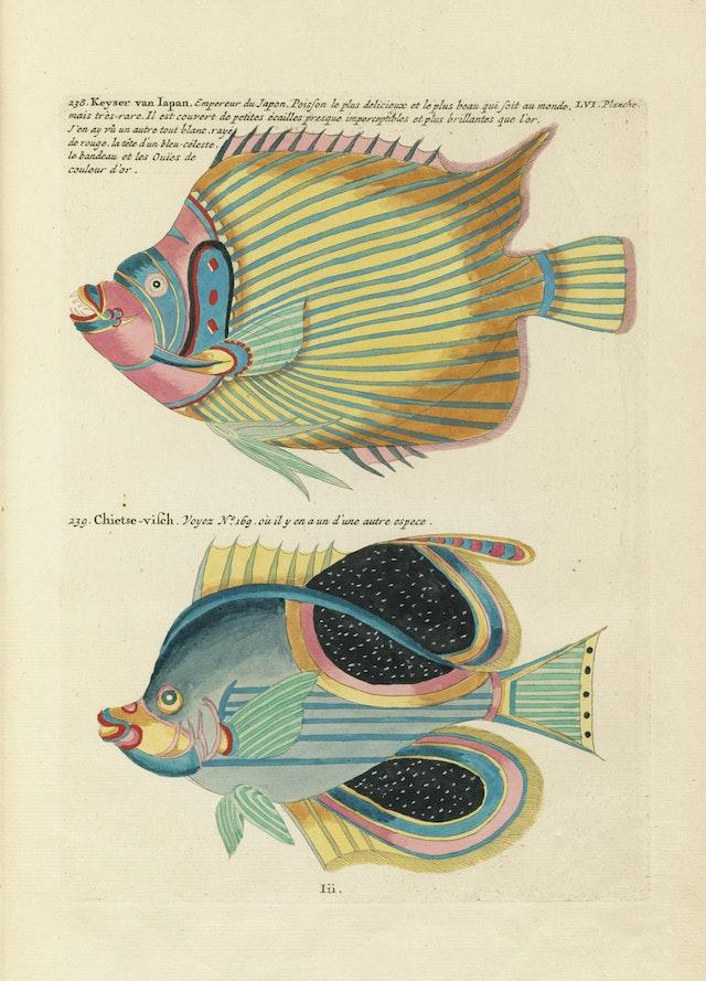Louis Renard's Fish, Plate LVI