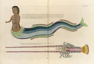 Louis Renard's Fish, Plate LVII