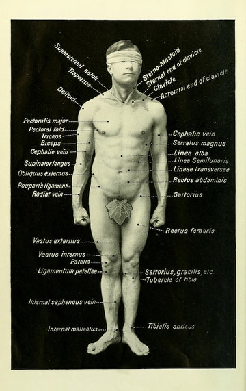 Diagram of the Body's Surface Marks, with Fig Leaf