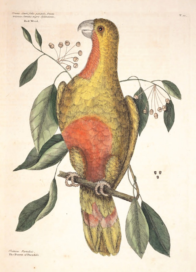 Natural History of Carolina, Florida and the Bahama Islands, v1. Tab 10