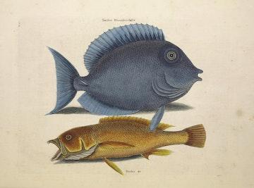 Natural History of Carolina, Florida and the Bahama Islands, v2. Tab 10