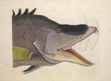 Natural History of Carolina, Florida and the Bahama Islands, v2. Tab 15