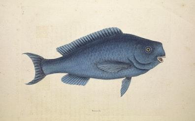 Natural History of Carolina, Florida and the Bahama Islands, v2. Tab 18