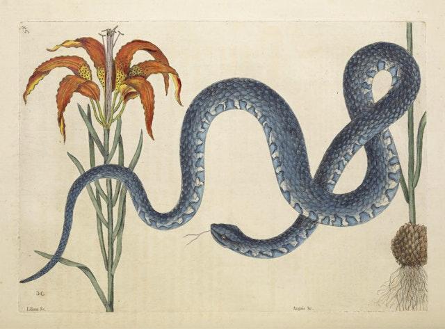 Natural History of Carolina, Florida and the Bahama Islands, v2. Tab 58