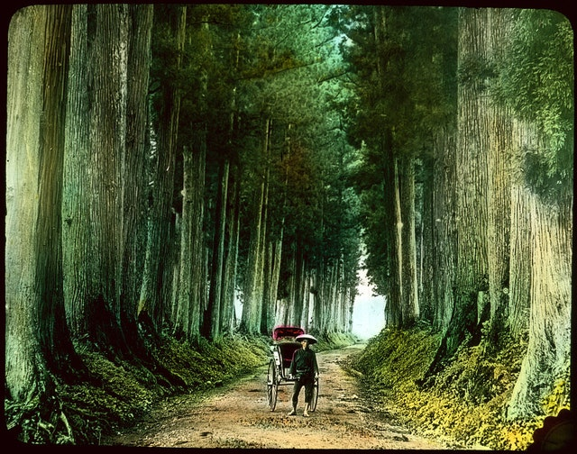 Man with Rickshaw on Tree-lined Road