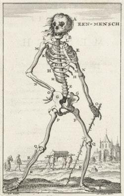 Skeleton of a Human Being (Heroic)