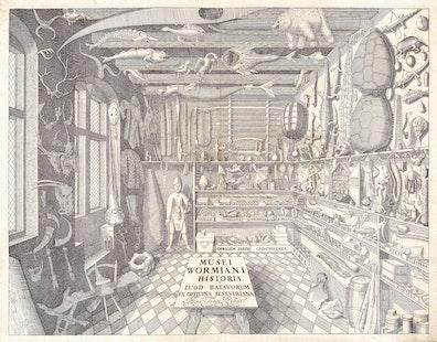 Ole Worm's Cabinet of Curiosities