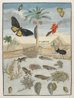Insects and Fish with Island Background