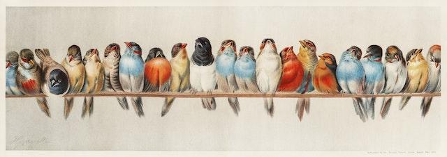 A Perch of Birds