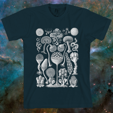 Haeckel Mycetoza T-Shirt